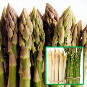 Asparagus, Darlise