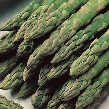 Aparagus, Gijnlim