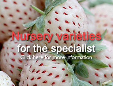 Nursery Fruit Varieties